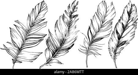 Plume d'oiseau vecteur de wing isolés. Élément d'illustration isolé. Noir et blanc Encre gravée l'art. Banque D'Images