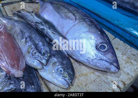 Le poisson frais sur un compteur à un marché aux poissons, sur l'île de Bali en Indonésie. Le thon, mahi-mahi, Dorado, coryphènes, Coryphaena hippurus, le maquereau. Savoureux. Banque D'Images