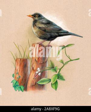 Blackbird mâle perché sur un poteau de bois avec un peu de contexte la végétation. Illustration technique mixte sur papier aux couleurs. Banque D'Images