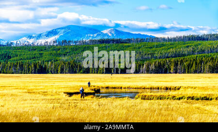 Pêche à la mouche dans la rivière Madison comme il serpente à travers les Prairies dans le Parc National de Yellowstone dans le Wyoming, États-Unis d'Amérique