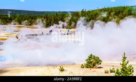 Les geysers sous ciel bleu dans le bassin en porcelaine de Norris Geyser Basin dans le Parc National de Yellowstone dans le Wyoming, États-Unis d'Amérique
