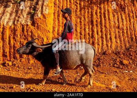 Un jeune homme monté sur un buffle, Pindaya, Shan State, Myanmar. Banque D'Images