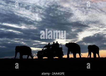 Kaziranga, Assam, Inde. 12 novembre 2019. Les touristes silhouette en safari dans une jeep comme d'éléphants sauvages pour marcher à côté d'eux à Kaziranga. Banque D'Images