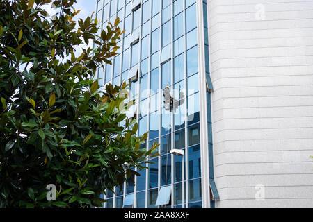 Nettoyant à travailler sur une façade de verre suspendu. Concept de nettoyage. Copy space Banque D'Images
