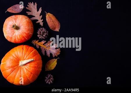 Deux citrouilles orange avec feuilles de chêne et le cône sur fond noir. Copier l'espace.
