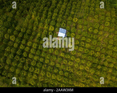 Vue aérienne d'orangers de plus en plus ferme, Bali, Indonésie