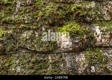 La mousse sur une surface rocheuse. Relief et texture de la pierre avec des motifs et de la mousse. Pierre avec mousse. Blocs de pierres couvertes de mousse. Banque D'Images
