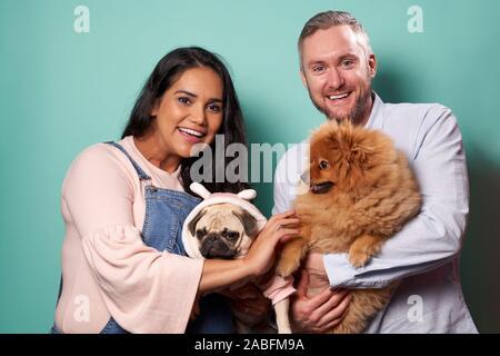 Femme enceinte et de l'homme tenir sur les mains de spitz et de carlin sur fond vert en studio Banque D'Images
