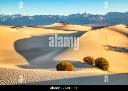 Mesquite dunes dans le Parc National de mort au lever du soleil, en Californie