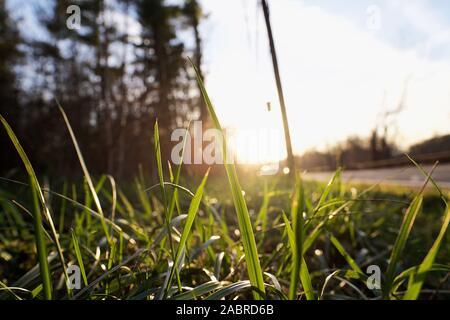 Coucher du soleil sur les brins d'herbe à côté de route à Manville, New Jersey