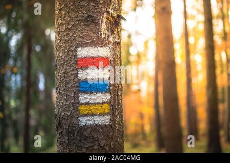 La route touristique de marquage peint sur l'arbre. Itinéraire de voyage signe. Saison de l'automne. Banque D'Images