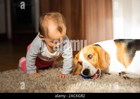 Chien avec un mignon caucasian baby girl sur la moquette dans la salle de séjour. Les morsures de chien un jouet bébé jouant avec