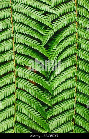 Contexte tropical vert. Texture parfaite fougères. Lignes abstraites dans la nature, figure géométrique. Concept de la nature, photo verticale. Banque D'Images