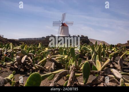Moulin Blanc dans le jardin de cactus - jardin de cactus Lanzarote Banque D'Images