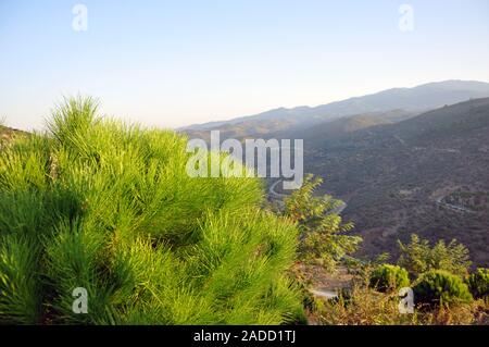 La nature unique de l'arbre sec de pin solitaire sur la montagne isolé avec fond de ciel bleu - motifs minimale Banque D'Images