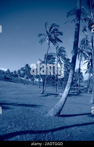 Arrière-plan bleu classique tropical. Palmier sur l'île de Pâques. Couleur de l'année. Coy2020 Banque D'Images