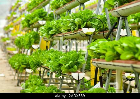 La technologie de l'agriculture urbaine verticale à Singapour Banque D'Images