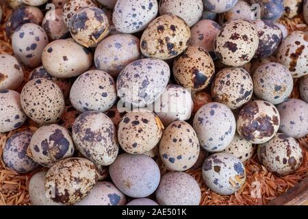 Eautifully fraîchement éclos et œufs tachetés à vendre en différentes couleurs dans un marché à Mandalay, Myanmar (Birmanie) Banque D'Images