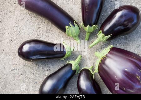 Gros plan du grand aubergines bio en cercle sur une table gris. L'agriculture et le jardinage. Concept d'aliments sains Banque D'Images