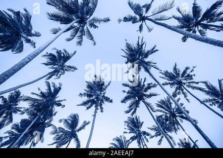 Arrière-plan de la mode hauts palmiers avec ciel bleu clair. Place vide et copier l'espace. Vacances tropicales concept. Banque D'Images