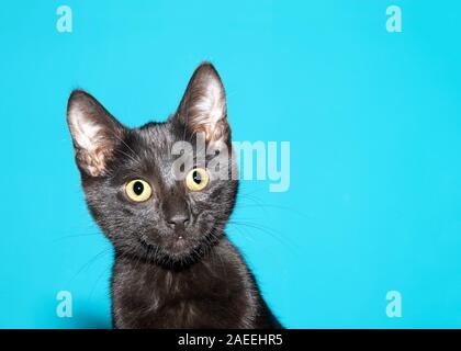 Portrait d'un adorable chat noir à droite avec surprise aux téléspectateurs curieux d'expression. Teal Turquoise background with copy space
