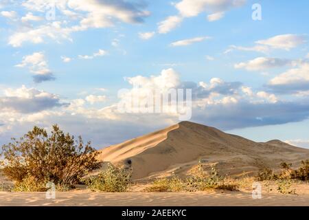 Lumière dorée sur Kelso dunes de sable au coucher du soleil dans le désert de Mojave, Mojave National Preserve, California, USA