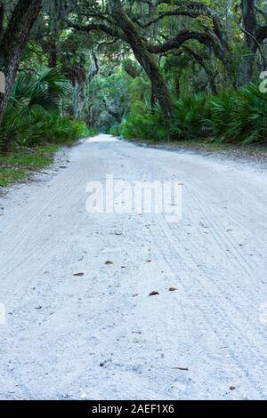 Un vieux chemin de sable bordée de chênes et le palmetto de scie sur Cumberland Island, en Géorgie. Banque D'Images