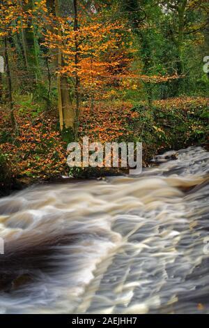UK,South Yorkshire,Sheffield,supérieure Coppice Weir en automne Banque D'Images