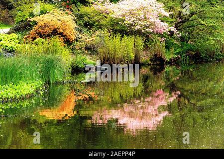 Reflets dans l'étang de jardin botanique Savill à Egham, Surrey, UK