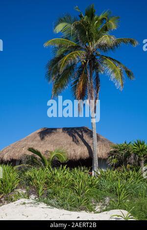 Palapas sur la plage d'un hôtel de luxe sur la Riviera Maya le Saint-alexis du Mexique près de Tulum Banque D'Images