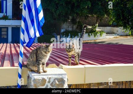 Deux chats tabby sauvages sur le toit avec drapeau grec, l'île de Kalymnos, Dodécanèse, Grèce Banque D'Images