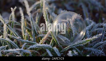 Une fragile bulle de savon transparent se trouve sur l'herbe gelée en hiver