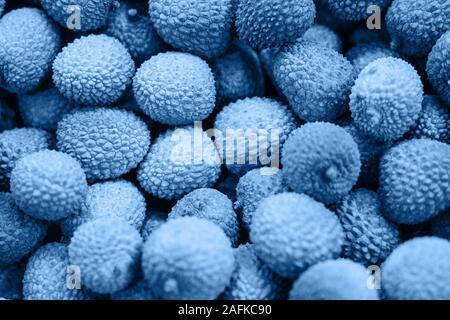 Fruit gros plan dans le quartier branché d'arrière-plan de litchi classique bleu couleur. Banque D'Images