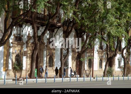 Les lignes d'arbres rue, Séville, Andalousie, Espagne Banque D'Images