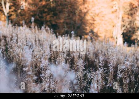Champ avec des plantes blanc et forêt d'automne background Banque D'Images