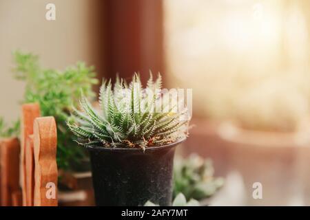 Mini succulent avec soft épine dans le jardin pot à décor vert accueil windows plante d'intérieur.