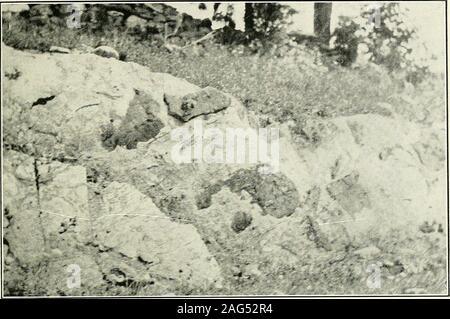 . Jefferson, Berkeley, et Morgan comtés, par G.P. Grimsley, assistant géologue. I.C. White, géologue de l'état. la régularité de la fréquence des appuis de ce matériau, s'il est plus souvent associée à la pierre de chaux qu'avec les schistes. Elle apparaît souvent comme une ledgetwo à quatre pieds d'épaisseur interstratifiées avec des calcaires bleu, c'est trouvé andagain sableuses interstratifiées avec. Les corniches de marbre se trouvent dans la partie supérieure de la forma-tion, mais elles semblent être plus commune dans la partie inférieure01 le Waynesboro. Il y a un horizon de très whitemarble Waynesboro dans la partie supérieure qui est Banque D'Images