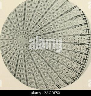 . Journal de microscopie électronique appliquée et les résultats de laboratoire. ^^ ^ Orthoncis - o splendida, Grunow.. ArachnoKdi-cus indicus, Ehf^ 1444 Journal de microscopie électronique appliquée