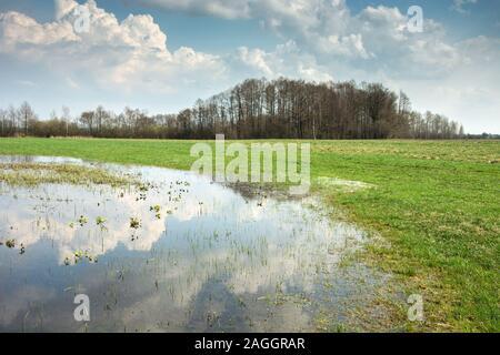 Gazon, forêt inondée sur l'horizon et les nuages dans le ciel bleu se reflétant dans l'eau Banque D'Images