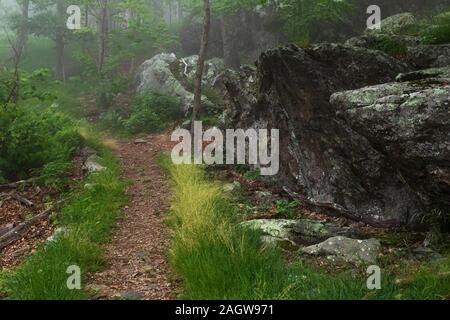 L'Appalachian Trail qui traverse une section de la forêt verdoyante de fougères, arbres, rochers et dans le Parc National Shenandoah, en Virginie Banque D'Images