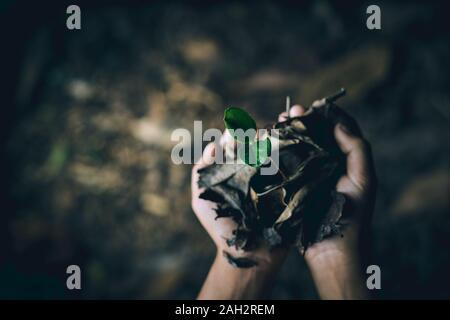 Boy mains tenant à la plantation de jeunes arbres pour réduire le réchauffement climatique, la conservation des forêts Banque D'Images