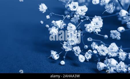 Petites fleurs blanches en tons de gypsophile trendy classique bleu - couleur de l'année 2020 concept. Modèle de carte de vœux. Floral background festive wi Banque D'Images