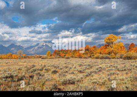 Feuillage de l'automne dans le Grand Tetons National Park, Wyoming