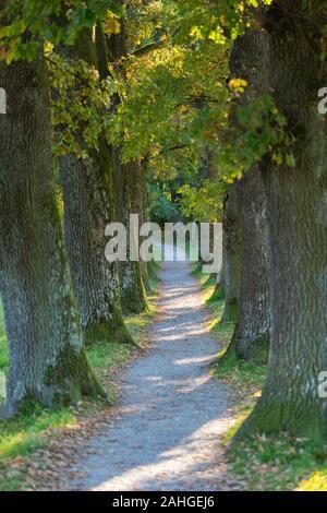 Vue sur une ruelle étroite / - sentier bordé d'arbres. Enfin le chemin fait un léger virage à gauche. Concept de mystère, l'inconnu, le voyage.