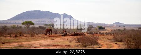 Les animaux, des zèbres, des éléphants sur l'eau au Kenya, on safari Banque D'Images