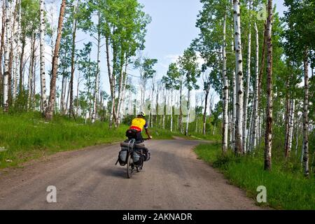 CO00208-00...COLORADO - équitation à travers une doublure de peupliers sur la route 129 de la section Alternative Columbine Great Divide Mountain Bike Route.
