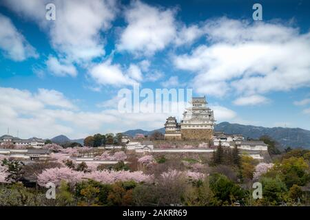 Pendant la saison des cerisiers en fleur fleurs printemps avec Himeji castle et beau ciel nuage à Himeji city, Hyogo près d'Osaka, au Japon. Le Japon Tourisme, histo Banque D'Images