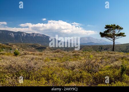 Vue panoramique sur le paysage à l'ouest de l'île grecque de Rhodes avec végétation verte au premier plan, arbre solitaire et chaîne de montagne dans l'arrière-gro Banque D'Images