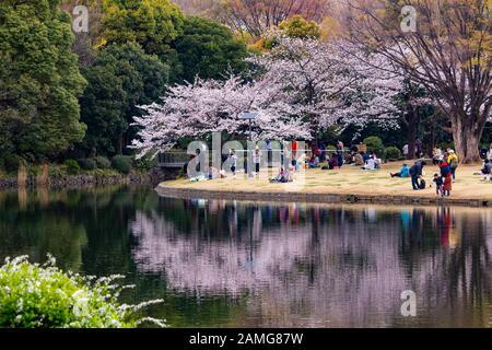 Les gens qui apprécient les cerisiers en fleurs au parc Kitanomaru de Tokyo, au Japon Banque D'Images