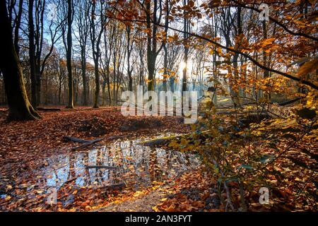 Flaque d'eau avec l'eau de pluie le long du côté de la route forestière au cours de l'automne au début de la matinée